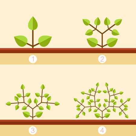branching: Vector image of the Dichotomous branching plants banner