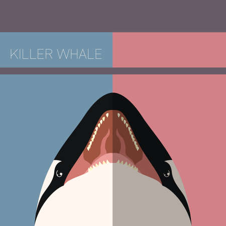 grampus: Vector image of the Killer Whale flat postcard