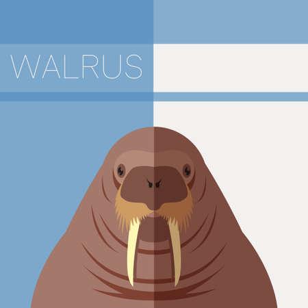 walrus: Vector imge of the Walrus flat postcard Illustration