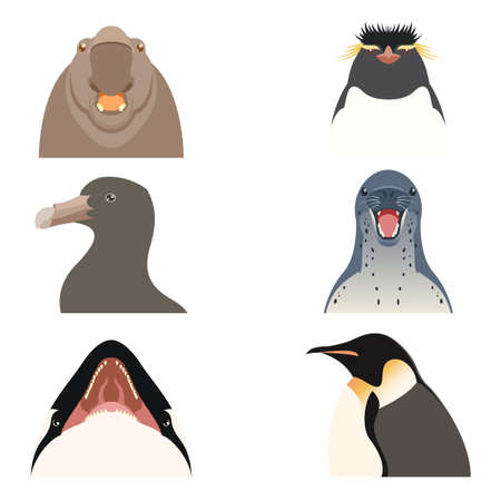 antarctic: Vector image of the Set of flat antarctic animal icons Illustration
