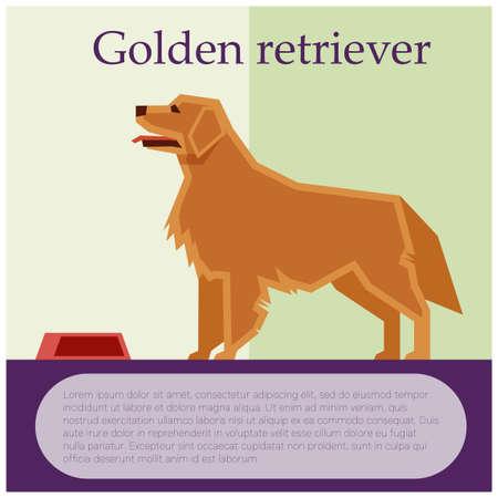 Golden retriever colourful postcard