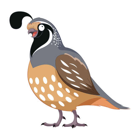 Cartoon happy Quail