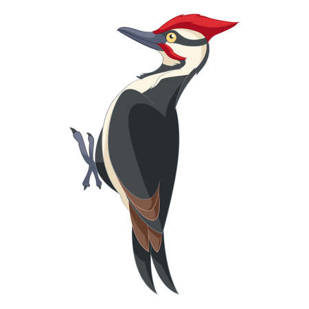 Vector image of the Cartoon smiling woodpecker