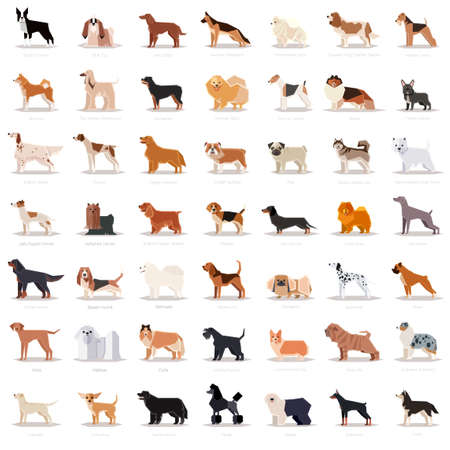 Big set of flat dog icons.