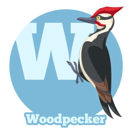 writting: Vector image of the ABC Cartoon Woodpecker Illustration