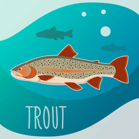 Trout fish banner Stock Photo