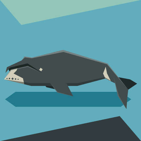 Flat design Bowhead whale Vettoriali