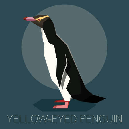 Flat Yellow-eyed penguin isolated on dark background.
