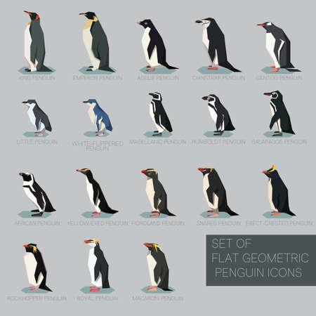 Grafika wektorowa zestawu płaskich geometrycznych gatunków pingwinów Ilustracje wektorowe