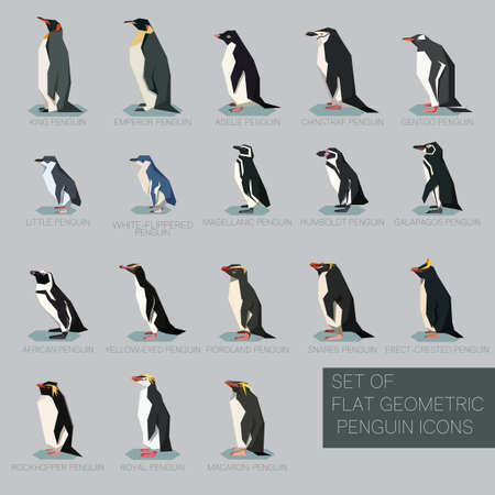 Vector image of the Set of flat geometric species of Penguins