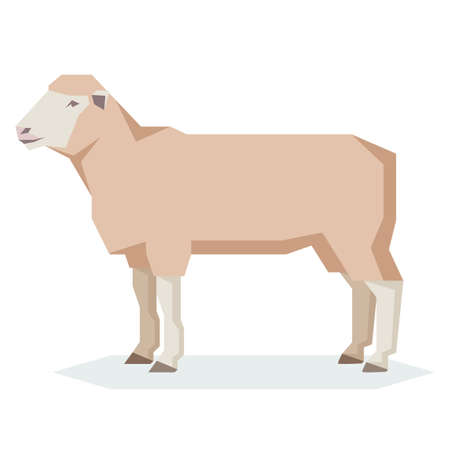 Vector image of the Flat geometric Dorset sheep