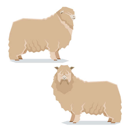 Vector image of the Flat geometric Leicester Long-wool Sheep