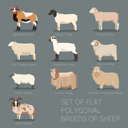 Vector image of the Set of flat polygonal breeds of sheep icons