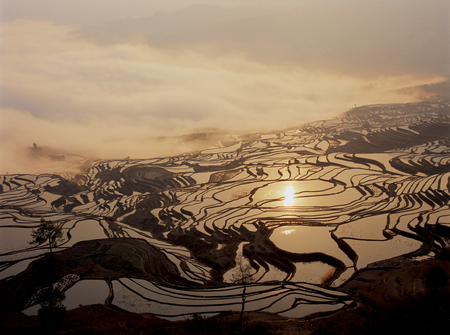 rice terrace: Rice terrace witht the sunrise