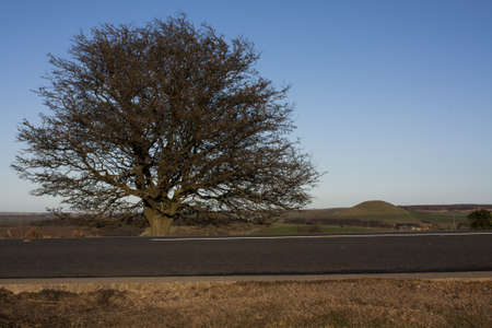 holyday: Road and tree in travel holyday