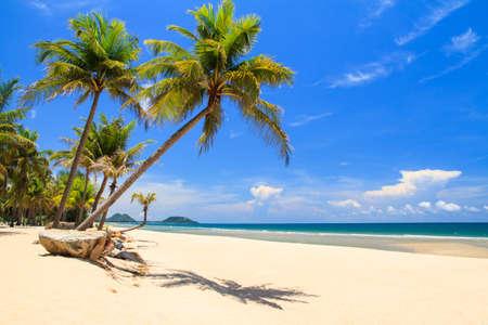 palmier: ATilt cocotier avec de la pierre sur la plage en saison estivale Banque d'images