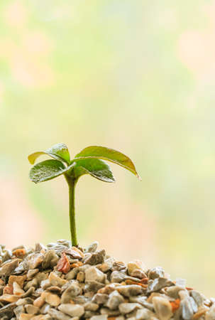 nurseling: Seedling plant on the rock