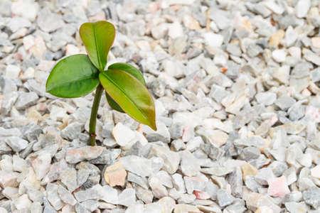 nurseling: Seedling on the white rock background