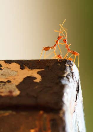romantics: Romantics red ant on steel Stock Photo