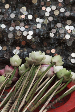 blessings: Lotus for blessings