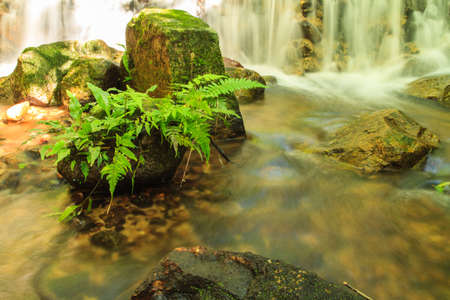 non urban scene: Fern and moss on the rock at Mae Kampong Waterfall in green forest