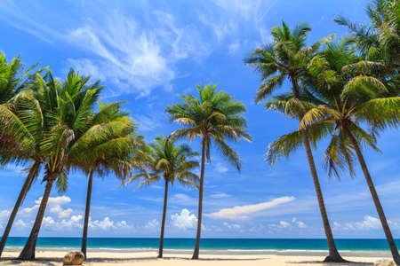 Coconut Trees On The White Beach, Summer Season. Stock Photo
