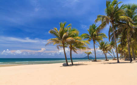 Coconut Trees On The White Beach, Summer Season. Stock Photo