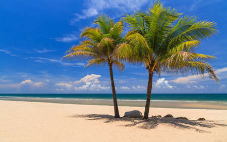 Two Coconut Trees On The White Beach. Stock Photo