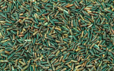Black glutinous rice as background (black sticky rice,black rice).