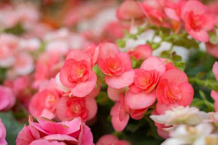 Close up of beautiful winter flowers