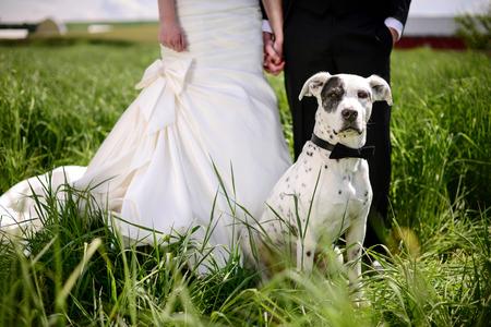 Bruiloft hond in strikje aan de voorkant van de bruid en bruidegom
