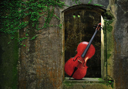 cello: monumenti volpati finestra e violoncello