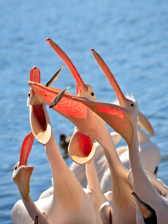 ludicrous: Pelican competition is ridiculous