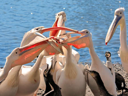 ridiculous: Pelican competition is ridiculous