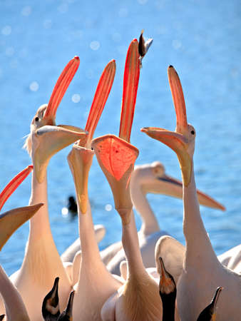 interest: Pelican competition is ridiculous