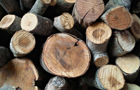 woodpile Stock Photo - 4906722