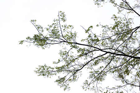 Old dry tree with branches and no leaves against a blue sky which can be used as a background, abstract green leaf on blue sky and sun light, Tree branches with blue sky background