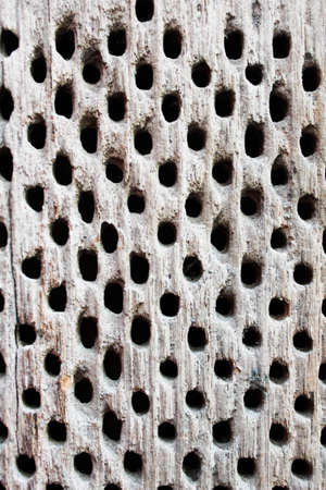 Old wood texture, grunge wood net, decorative wooden wall panel, wood with abstract  pattern, Close up vintage wood wall background with dark small hole, Holes on wooden floor,old wooden floor texture and surface