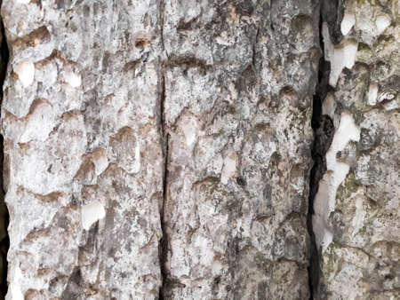 Abstract Tree bark texture. Natural wood background, bark textures, Textured and surface of the bark on trunk of the big tree in the forest Reklamní fotografie - 131988673