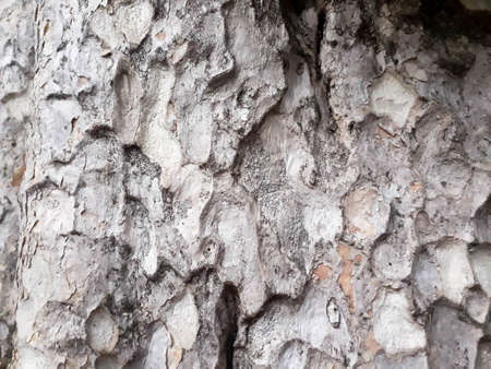 Abstract Tree bark texture. Natural wood background, bark textures, Textured and surface of the bark on trunk of the big tree in the forest
