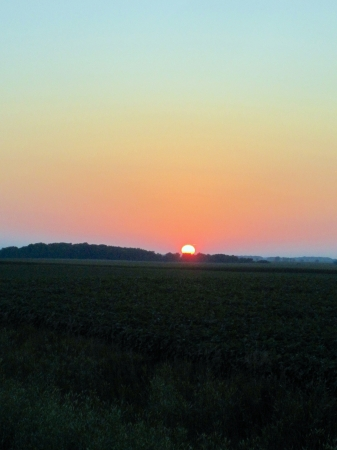 midwest: Midwest sunset over a cornfield