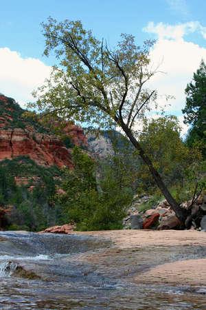 Tree balancing on edge of stream Reklamní fotografie