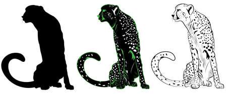Cheetah Ilustrace