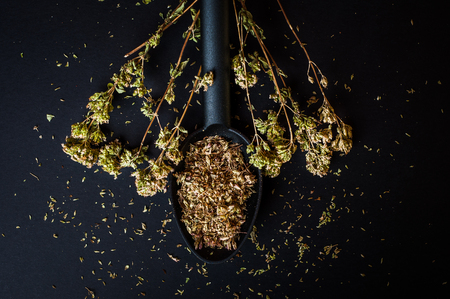 herbolaria: Stems of dried oregano and crumbled leaves on spoon