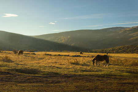 Horses grazing at sunset in Aguilar de Campoo. Stock Photo
