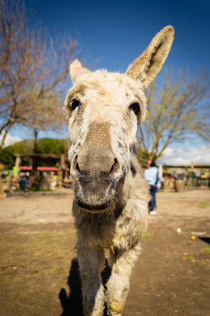 Donkey coming at me with a soft smile in its face 写真素材