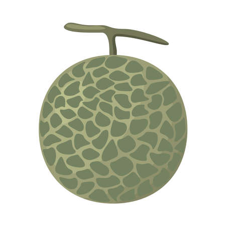 Illustration vector of a melon