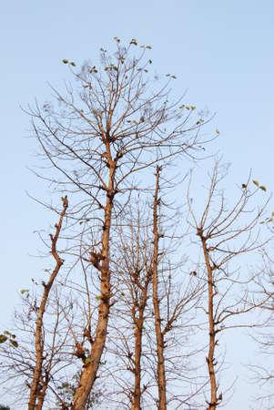albero secco: Albero Asciutto
