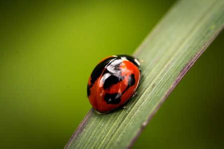 karnataka: Ladybug on a Leaf