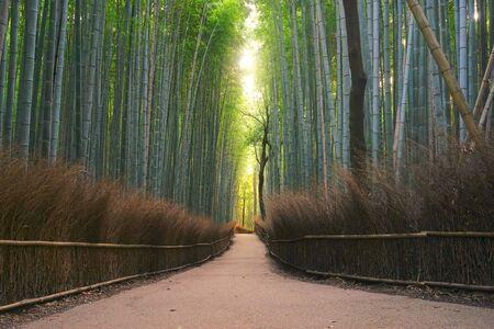 bamboo forest, Arashiyama, Kyoto Pref., Japan Stock Photo